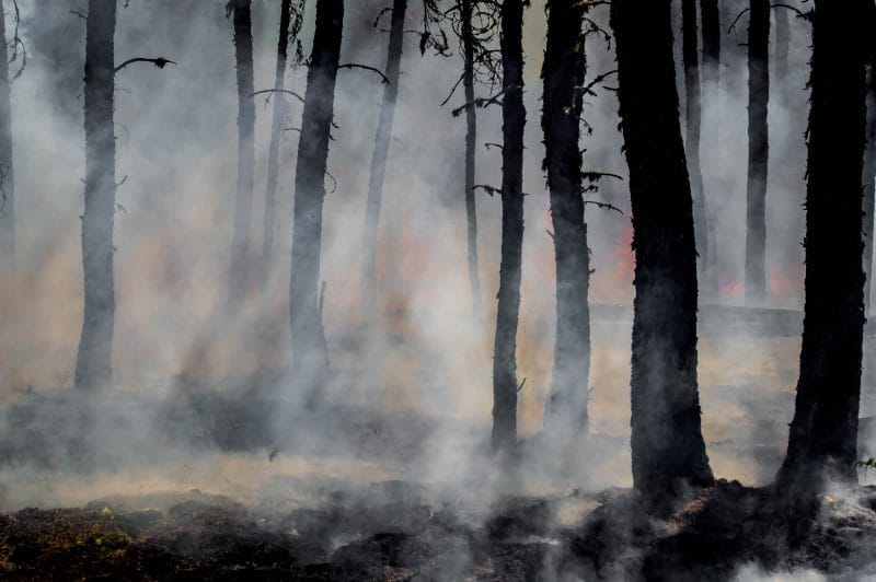 Post-Wildfire Efforts Help Reduce These After Effects - Fraker Fire